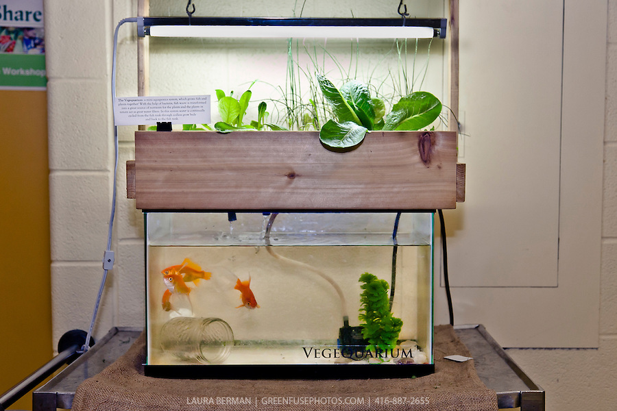 Easy Diy Aquaponics System Review
